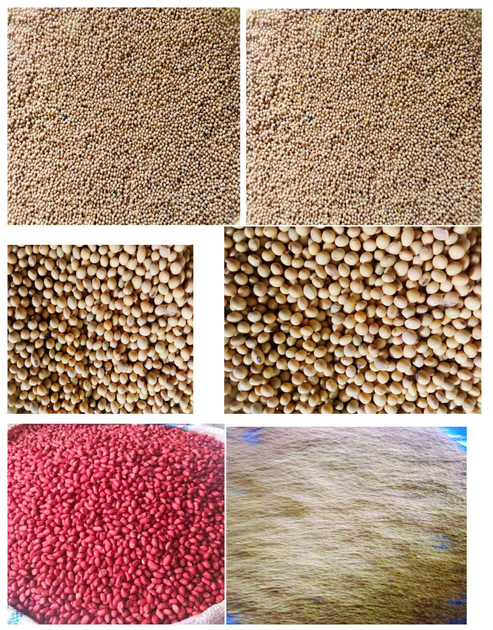 PRODUCE/ CEREALS FOR SALE